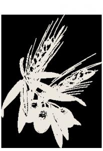 grano-olio-205x300
